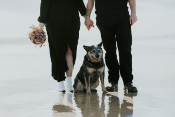 A close up image of a bride and groom from the wasit down, holding hands and the focus on their dog looking at the camera, all of them standing on a long white sandy beach